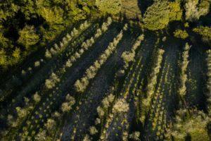 olivier villa toscanna
